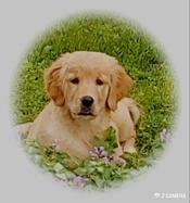Puppies for Sale Alberta